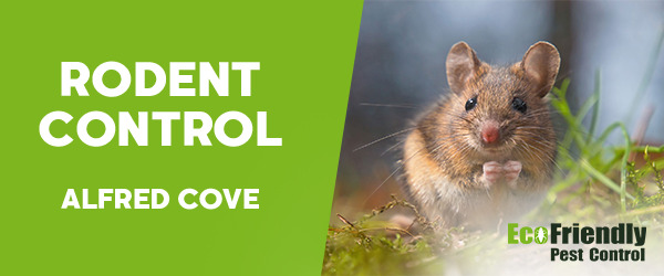 Rodent Treatment Alfred Cove