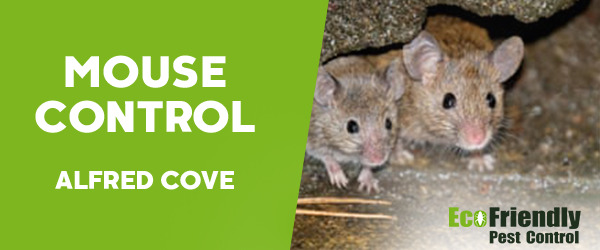 Mouse Control Alfred Cove