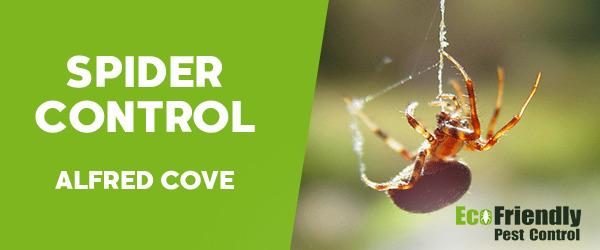 Spider Control Alfred Cove