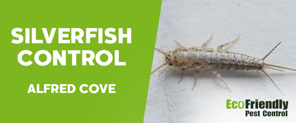 Silverfish Control Alfred Cove