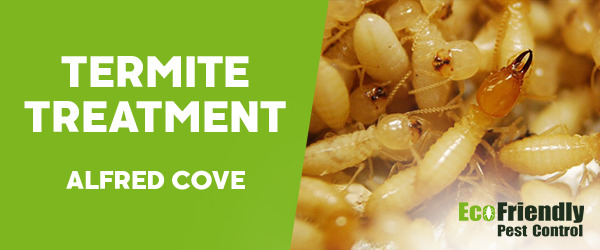 Termite Control Alfred Cove