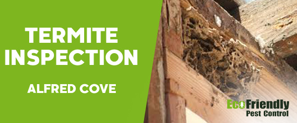 Termite Inspection Alfred Cove