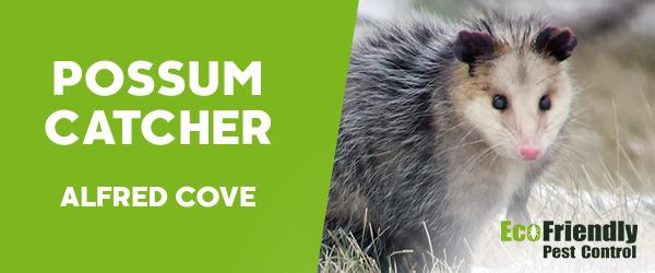 Possum Catcher Alfred Cove