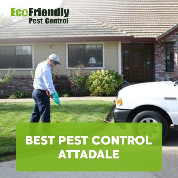 Best Pest Control  Attadale