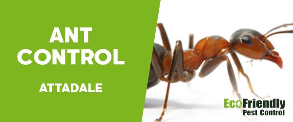 Ant Control  Attadale