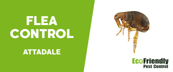 Fleas Control  Attadale