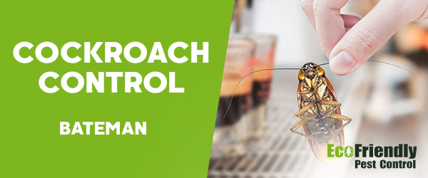 Cockroach Control Bateman