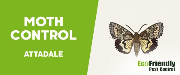 Moth Control  Attadale