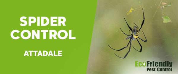 Spider Control  Attadale