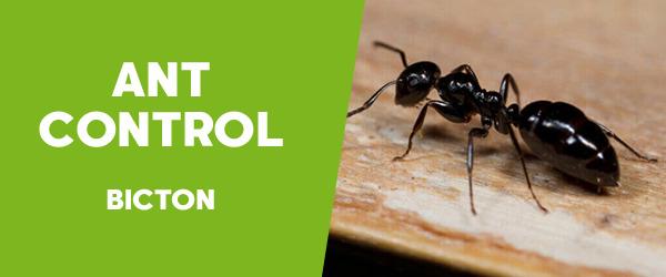 Ant Control Bicton