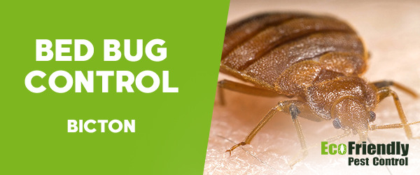 Bed Bug Control Bicton