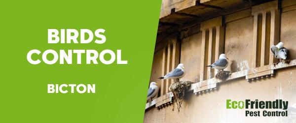Birds Control Bicton