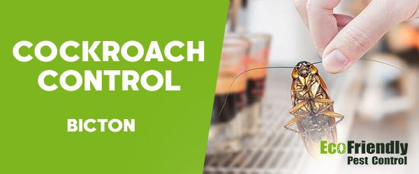 Cockroach Control Bicton
