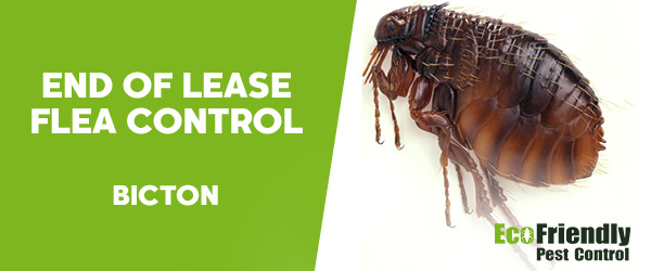 End of Lease Flea Control Bicton