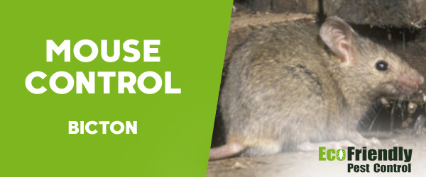 Mouse Control Bicton