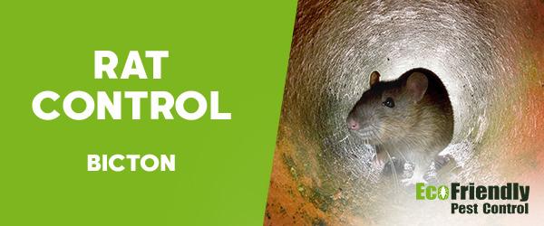 Rat Pest Control Bicton