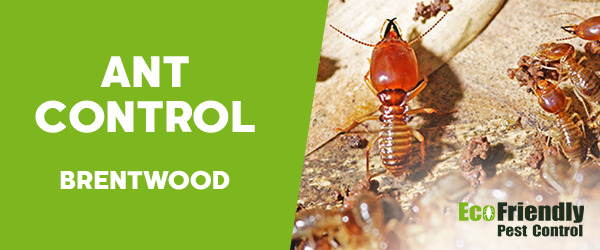 Ant Control  Brentwood