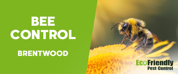 Bee Control  Brentwood