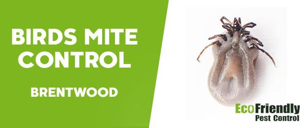 Bird Mite Control  Brentwood