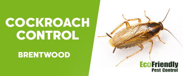 Cockroach Control  Brentwood