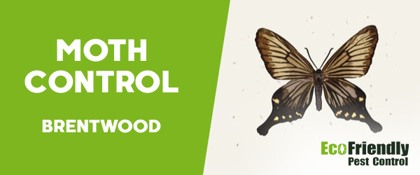 Moth Control  Brentwood