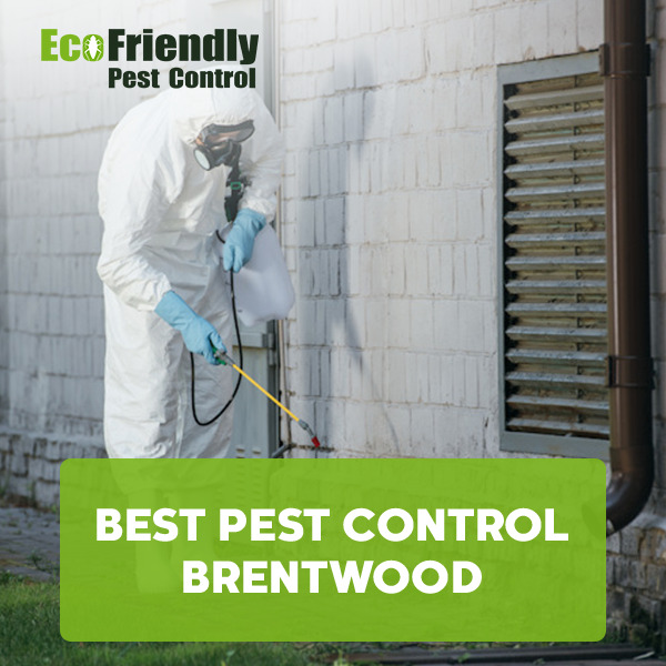 Best Pest Control  Brentwood