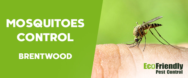 Mosquitoes Control  Brentwood