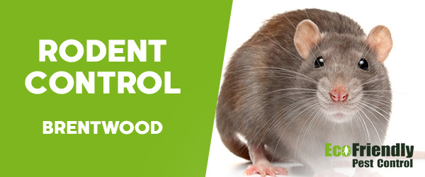 Rodent Treatment  Brentwood