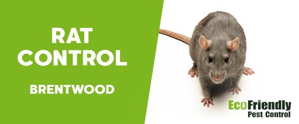 Rat Pest Control  Brentwood
