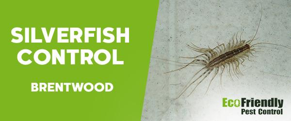 Silverfish Control  Brentwood