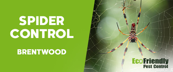 Spider Control  Brentwood