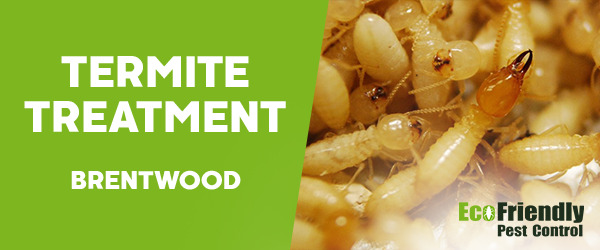 Termite Control  Brentwood