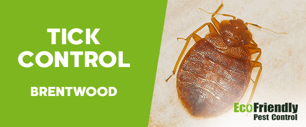 Ticks Control  Brentwood