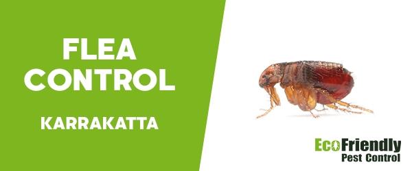 Fleas Control Karrakatta