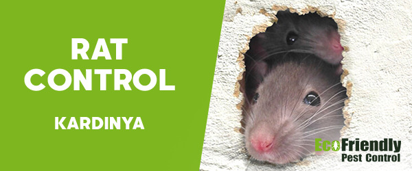 Rat Pest Control Kardinya