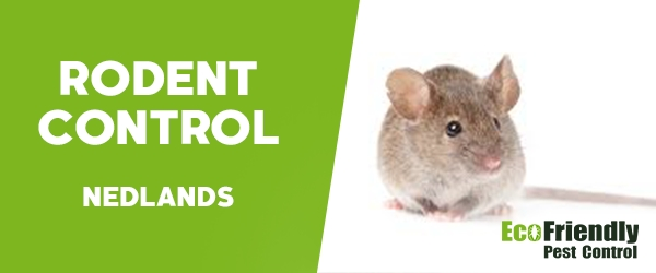 Rodent Treatment  Nedlands