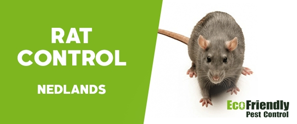Rat Pest Control  Nedlands