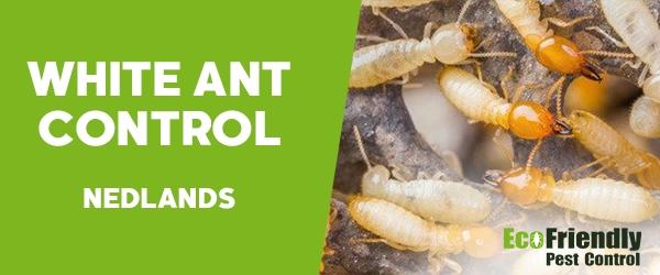White Ant Control  Nedlands