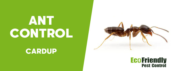 Ant Control Cardup