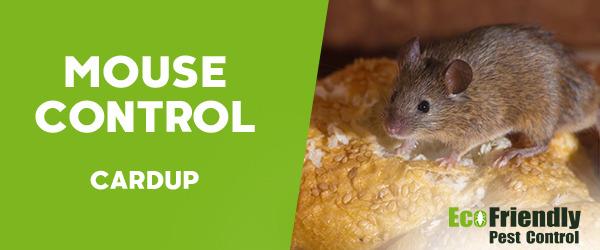 Mouse Control Cardup