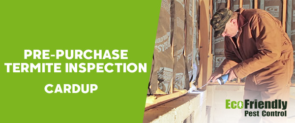 Pre-purchase Termite Inspection Cardup