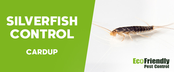 Silverfish Control Cardup