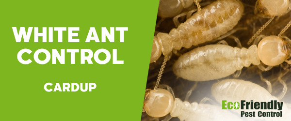 White Ant Control Cardup