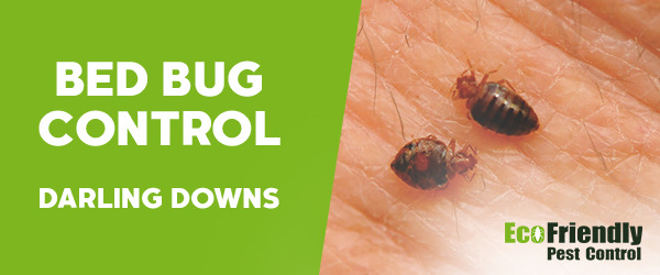 Bed Bug Control Darling Downs