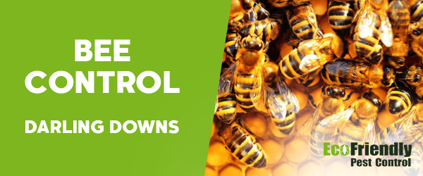 Bee Control Darling Downs