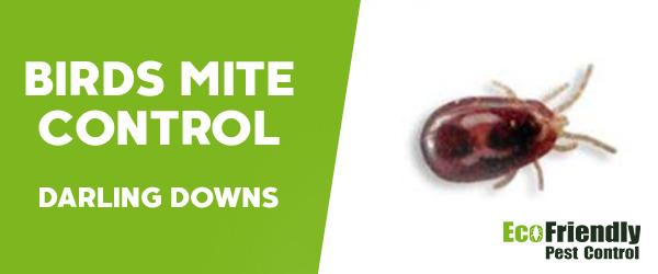 Bird Mite Control Darling Downs