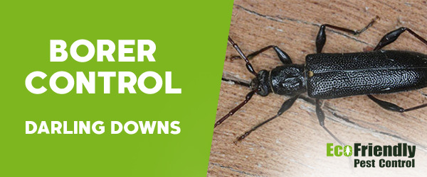Borer Control Darling Downs