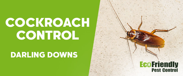 Cockroach Control Darling Downs