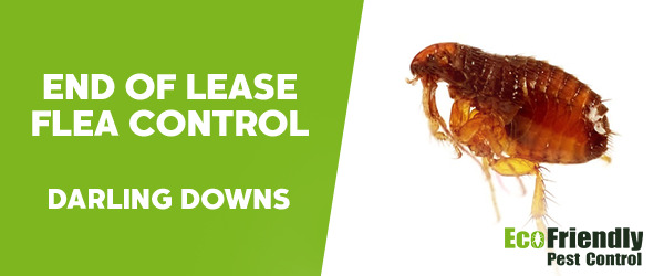 End of Lease Flea Control Darling Downs