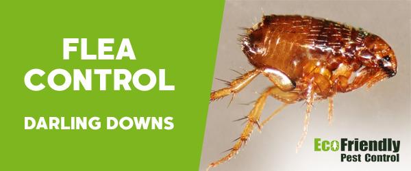 Fleas Control Darling Downs